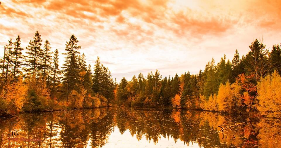 Fall colours of Northern Nova Scotia.