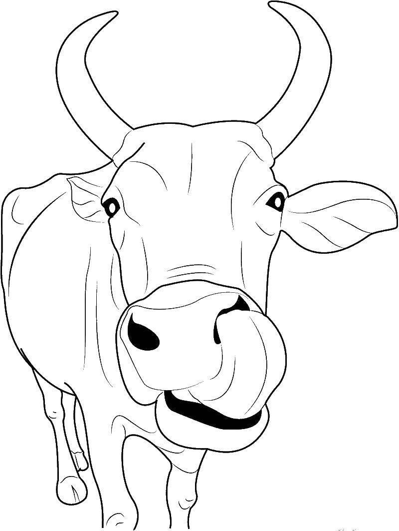 Раскраска Быки и Коровы на Новый год 2021 для детей в 2020 г