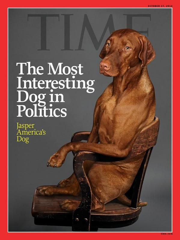 Fivefanps Nice To See Jasper Make The Cover Of Time Magazine Again Danaperino Pic Twitter Com 2icoidtesd In 2020 Vizsla Vizsla Dogs Dogs