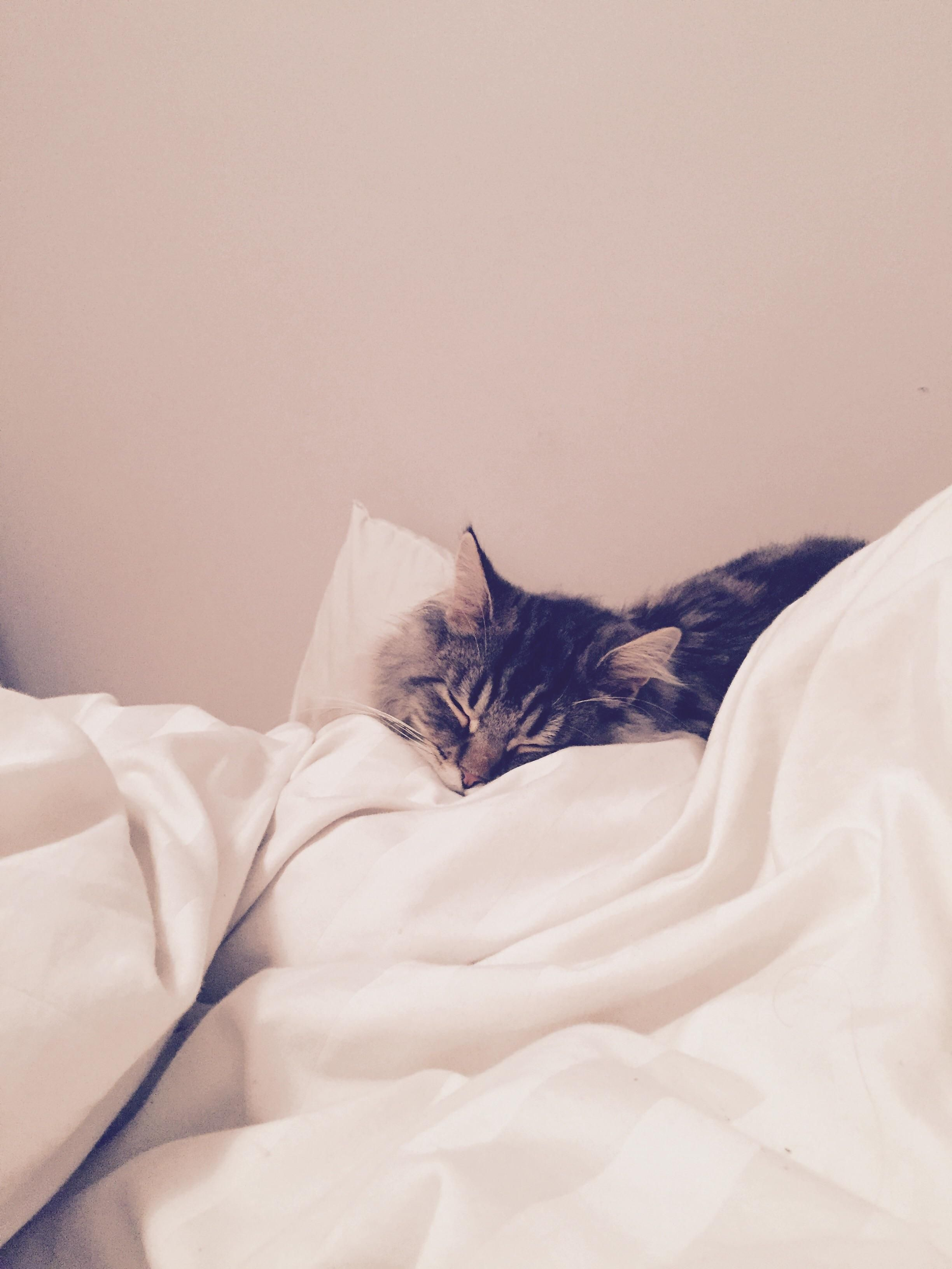 A lazy sunday morning is not complete without my kitty
