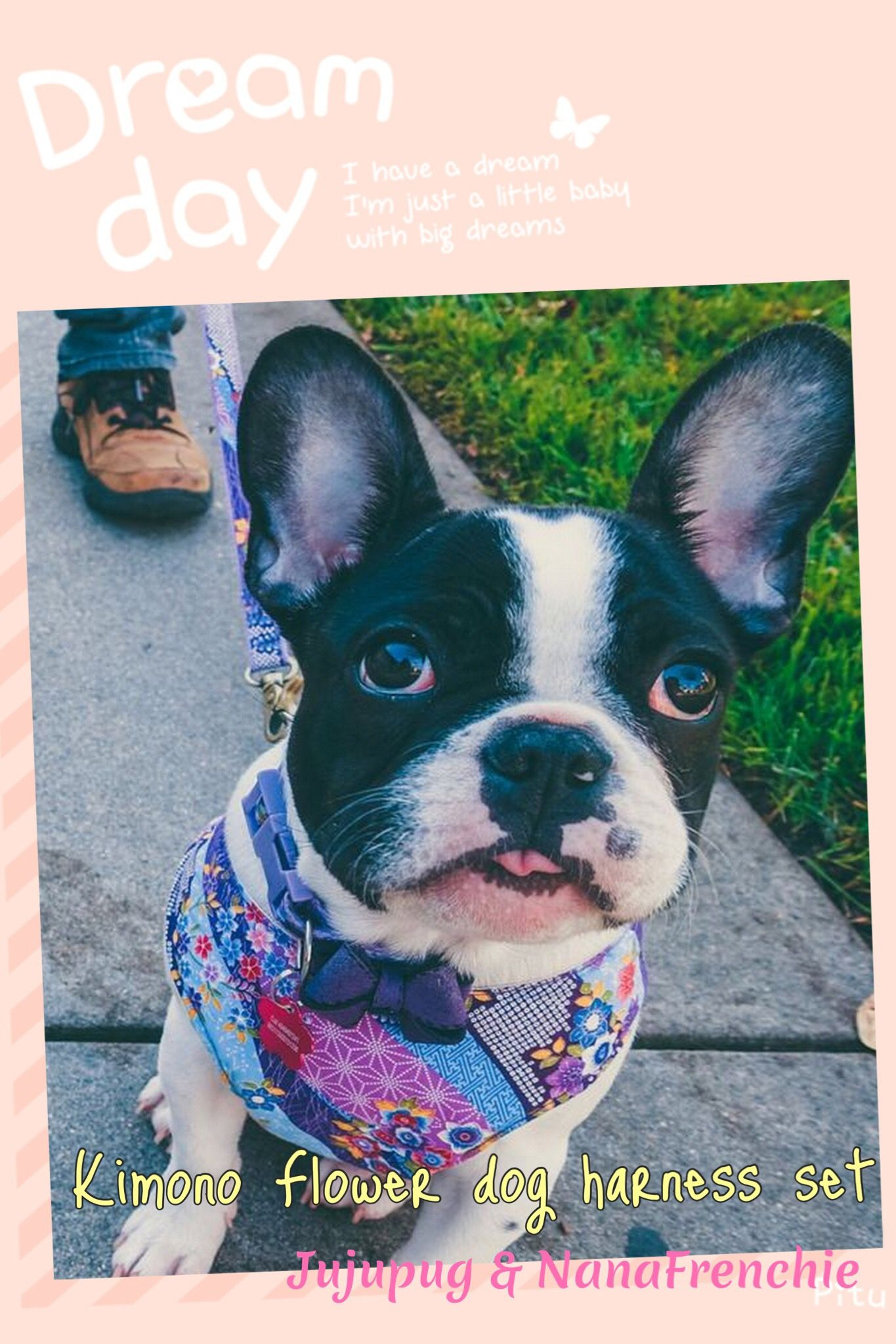 Purple Adjustable Dog Harness Custom Small Dog Vest Harness Girl