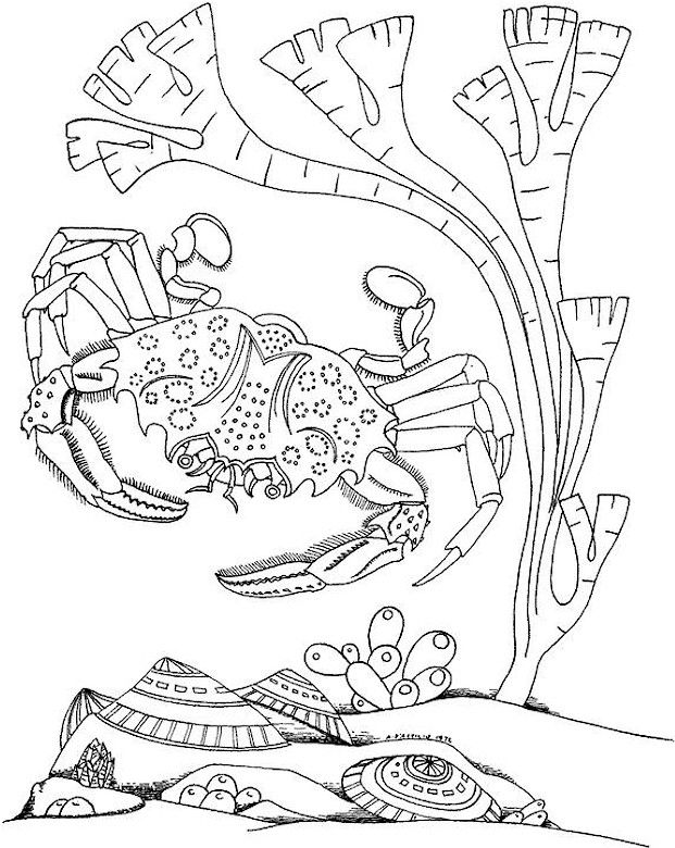 Coloring Pages for Adults Only   adult coloring pages printable ...