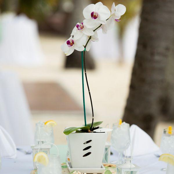 September Wedding Flowers In Season: Flowers In Season In August