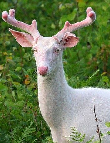 Photo of Top 10 Pictures Of The Rarest Albino Animals