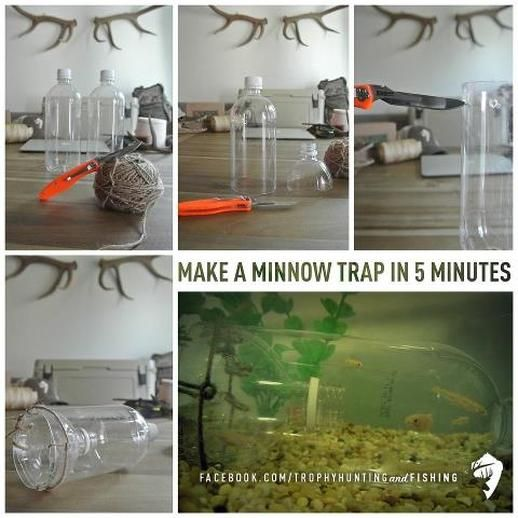 Diy Minnow Trap Trapping Bait For Larger Fish Or To Use As