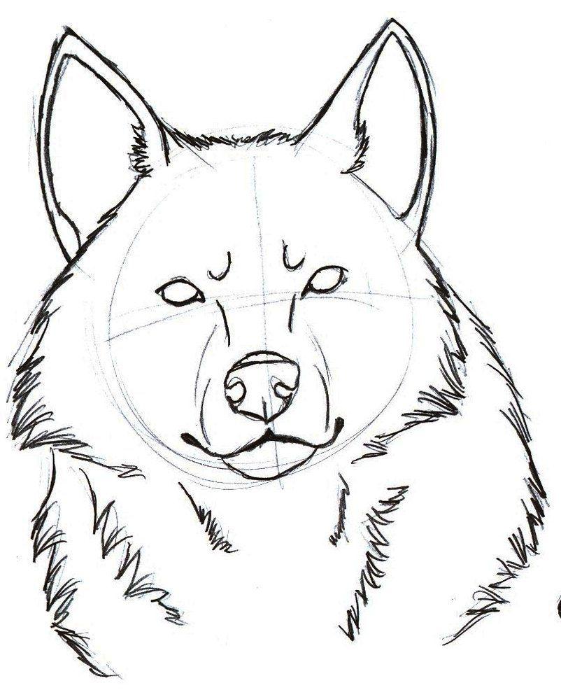 Wolf Head Drawings Wolf Head Sketch 1 By Sparkpaw