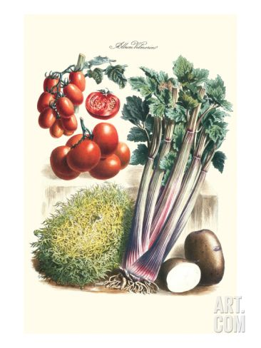 Vegetables Tomato Varieties Celery And Potato Art Print Philippe Victoire Leveque De Vilmorin Art Com Vegetable Prints Botanical Art Kitchen Decor Vegetables