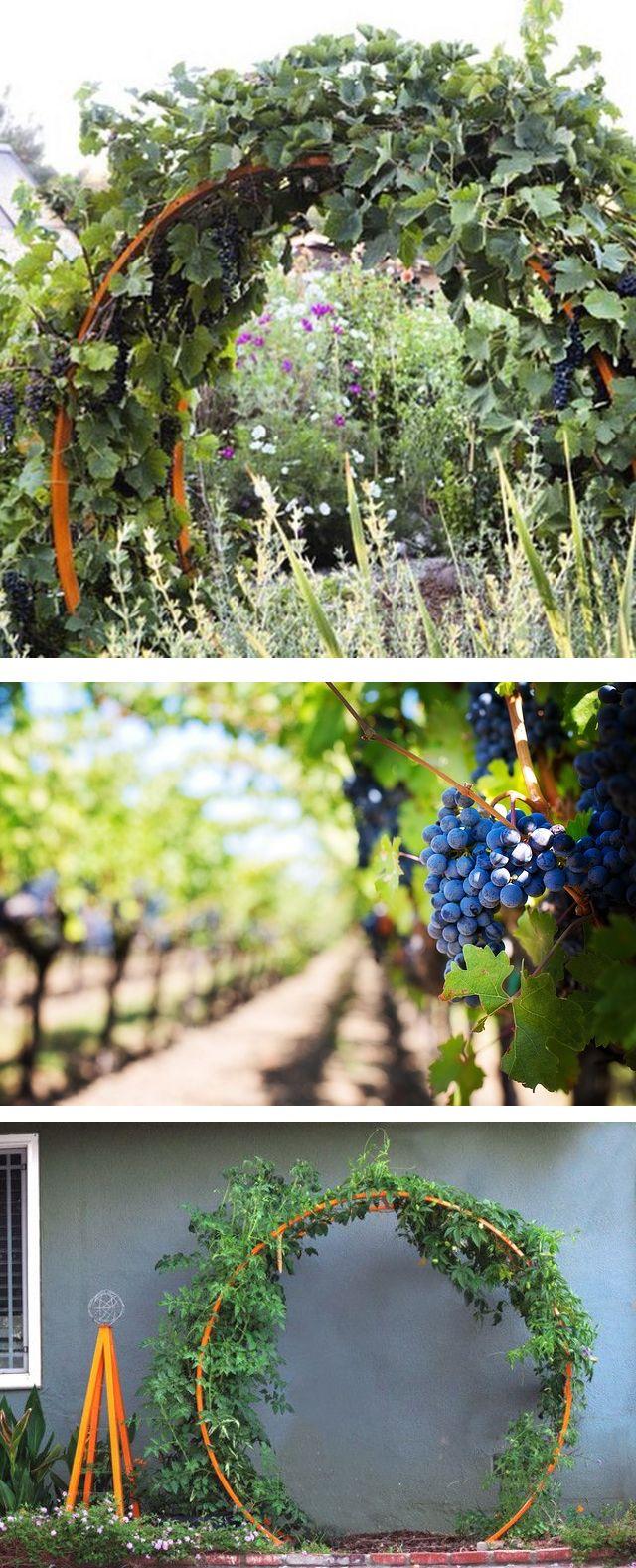 gracie modern arbor grape vines arbors and plants