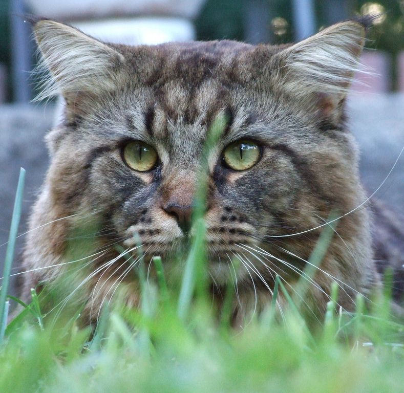Cat Escaping: 5 Tips To Keep Your Cat Indoors