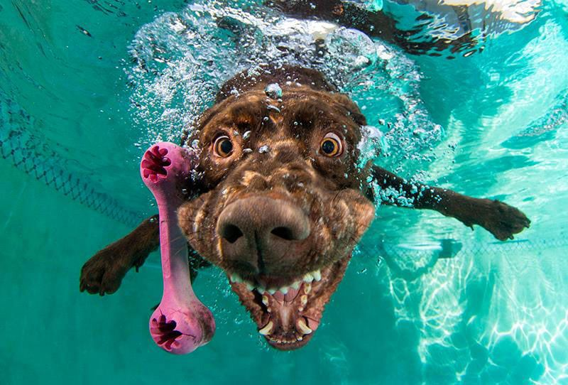 These Dogs Looks Hilarious When They Dive Underwater To Fetch Toys