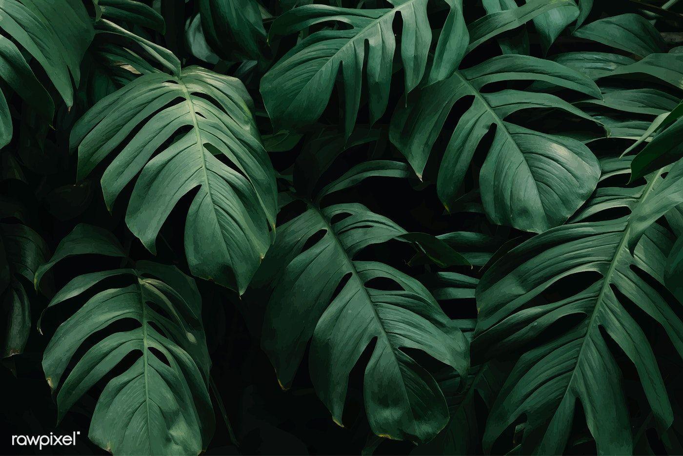 Download Premium Vector Of Green Tropical Leaves Background Vector 597507 Green Leaf Background Leaf Background Plant Wallpaper