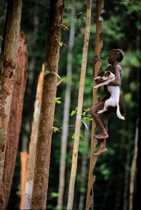 Korowai Woman Climbing to Her Home: New Guinea, by Bob Pelage - Pixdaus