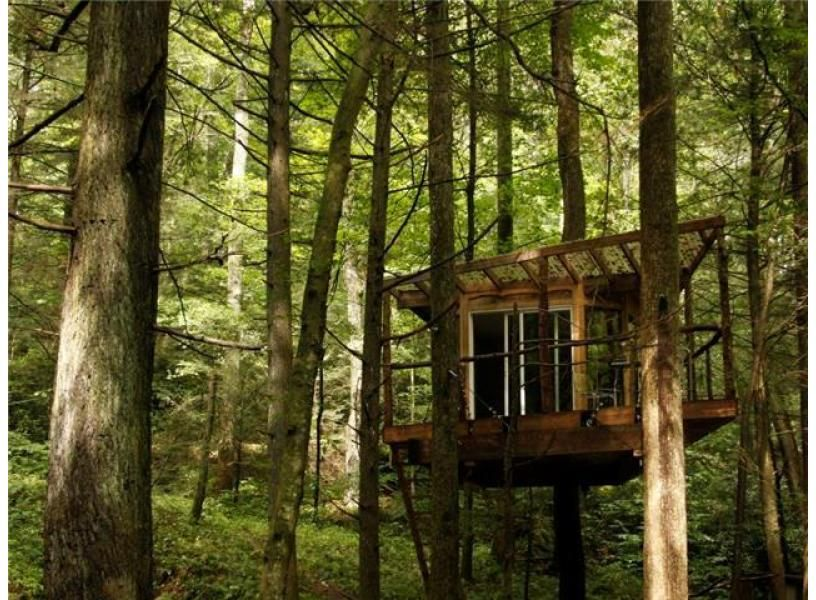Flying squirrel tree house red river red river