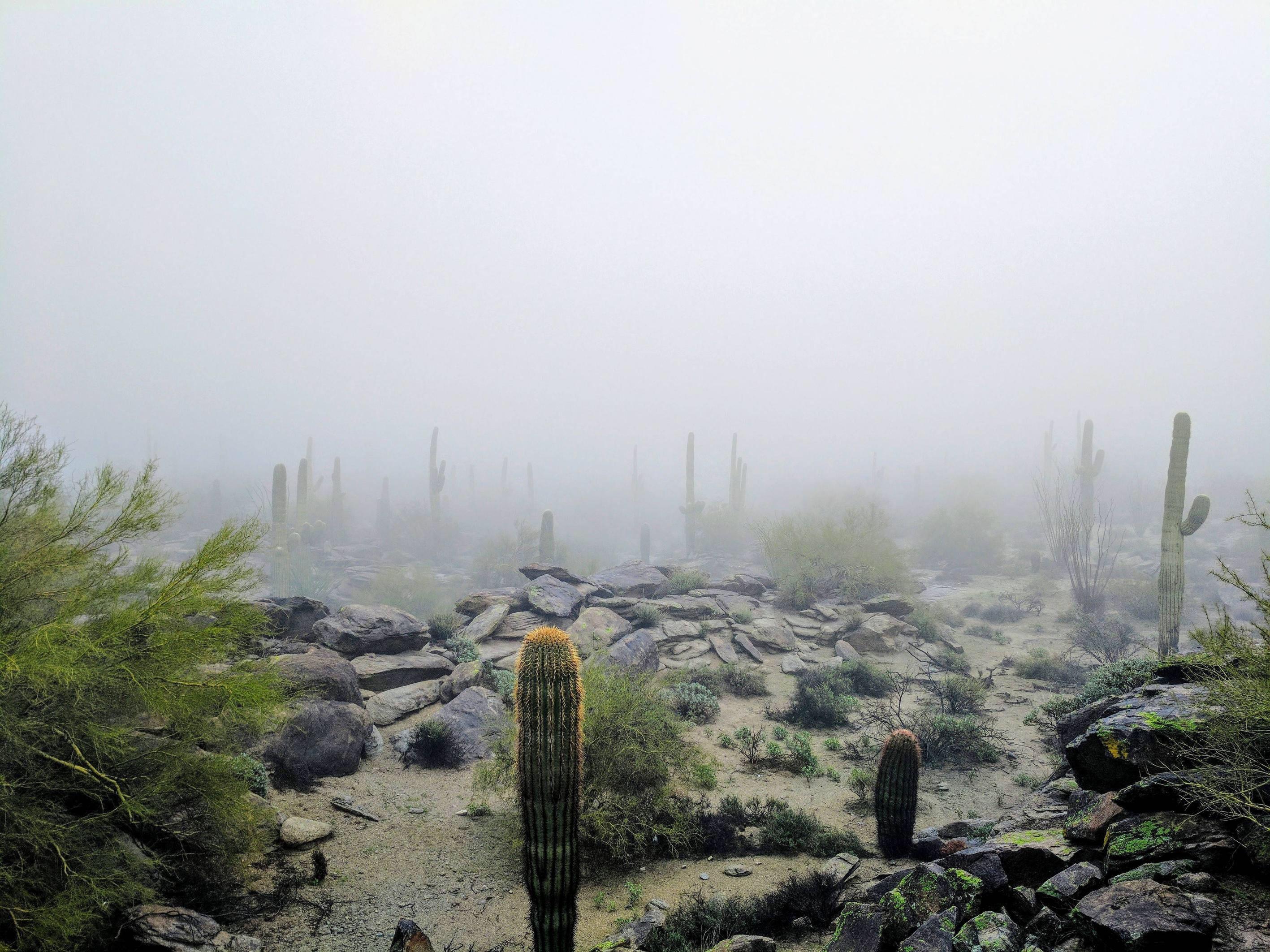 Cloud covered saguaro forest in Phoenix [4048x3036][OC]