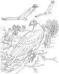 Turkey Vultures In A Desert Soarin Hawk Bird Coloring Pages