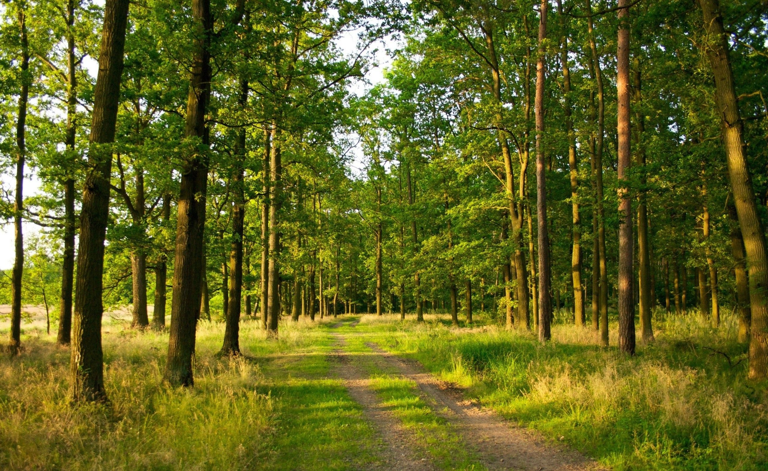Forest Photography Nature Landscape Trees Forest Path