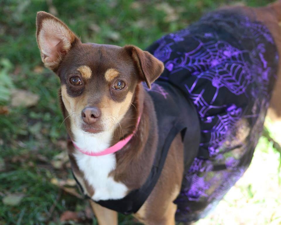 12+ Animal rescue colorado springs ideas