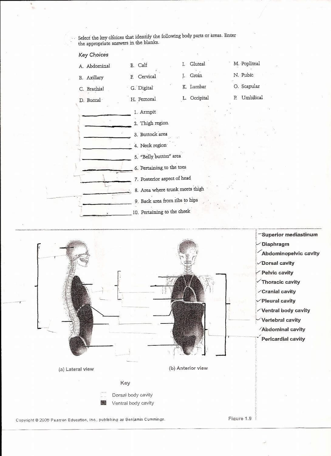 Image result for Anatomy Labeling Worksheets (With images