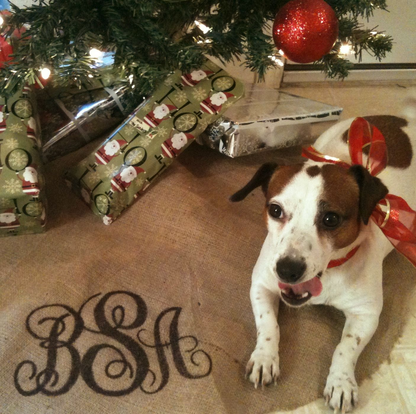 Monogrammed Burlap Tree Skirt and my Jack Russell, Nola <3 ...
