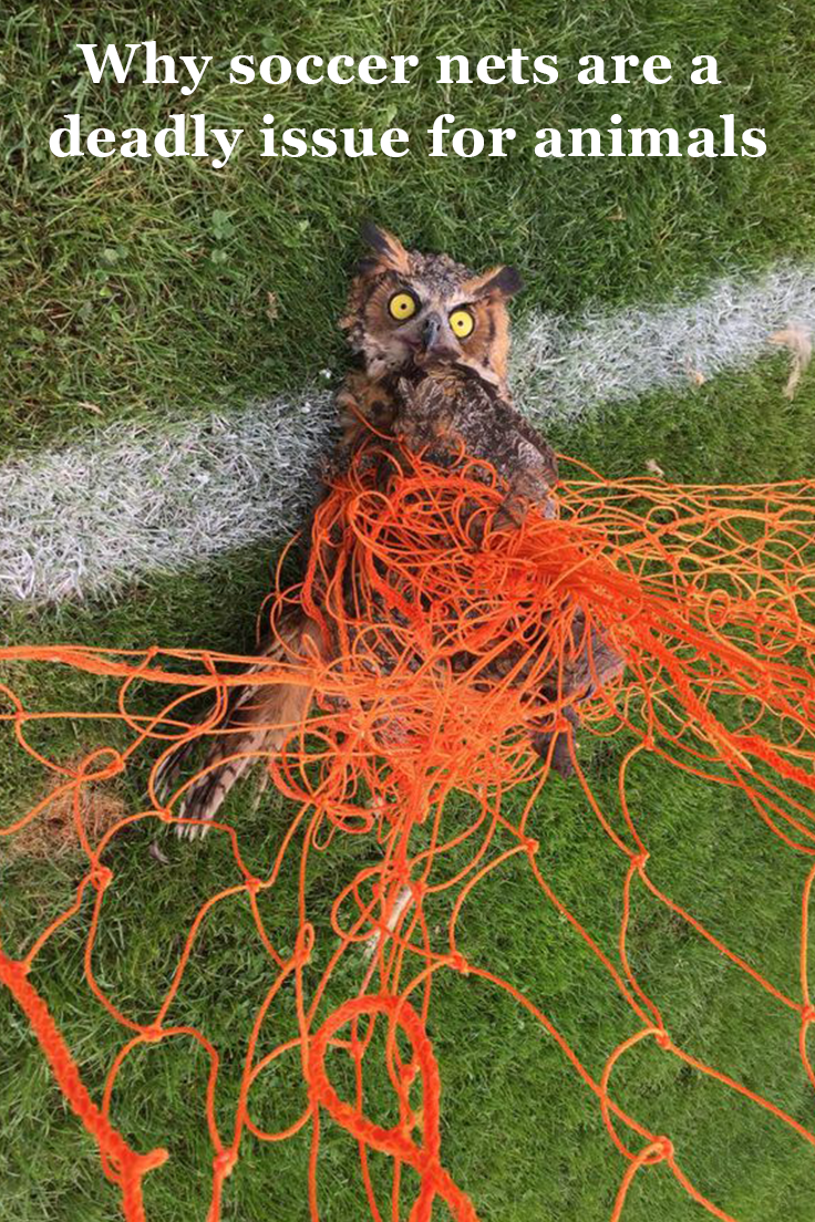 Why Soccer Nets Are a Deadly Issue for Animals Animals