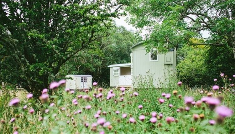 Snowdonia Shepherds' Huts in wildflower meadow, near Betws ...