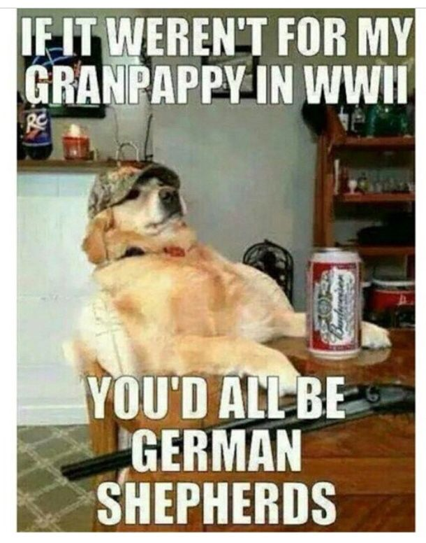 51bed4993a4a8254724179fa302060bd redneck retriever lol pinterest funny things and humor