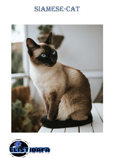 افضل 10 قطط في العالم The 10 Best Types Of Cat الاستضافة لعالم المنزل Cats Types Of Cats Animals