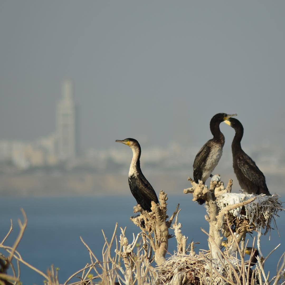 Imponente se yergue la Isla de Madeleine en frente la costa de Dakar! Más info en el blog!