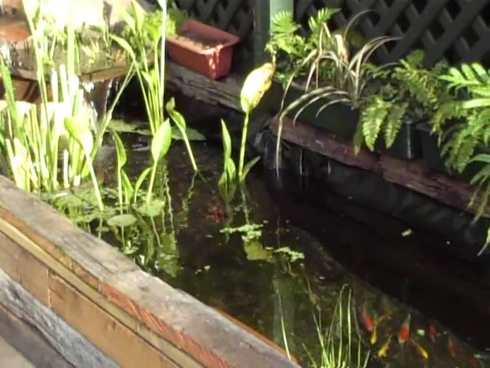 My natural looking Koi fish Pond Water Garden (two weeks old