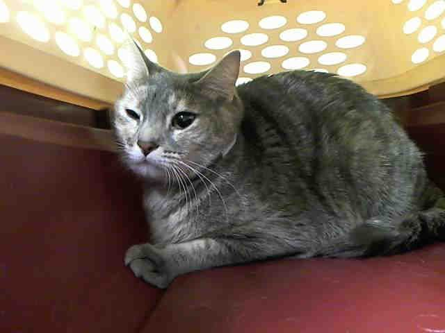 Lolo 8219 Aka A1111321 Cats Living With Cats Cat Shelter
