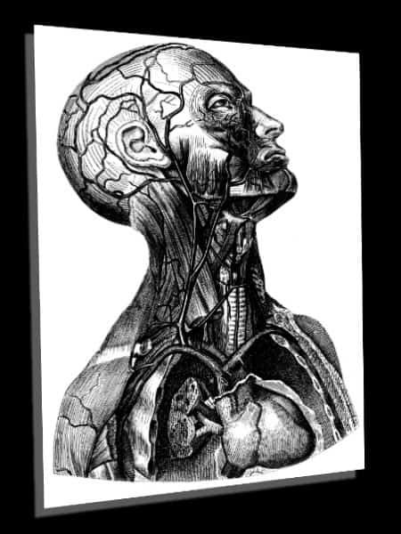 Vintage Anatomy Art and Book Illustrations