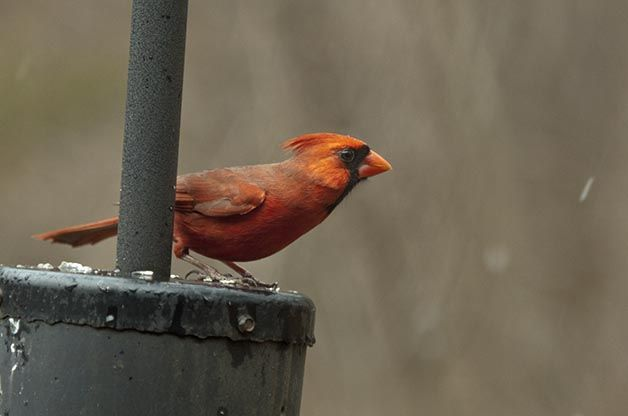 Top Winter Bird Feeding Tips | Bird species, Bird feeders ...