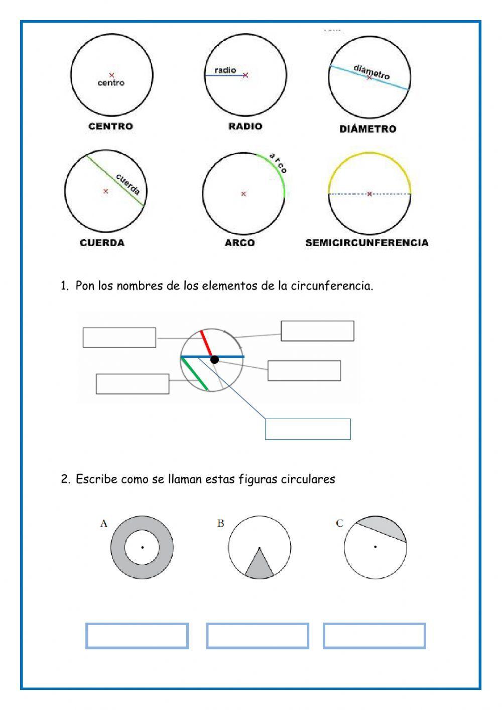 Circulo Y Circunferencia Ficha Interactiva Circulo Y Circunferencia Circunferencia Material Didactico Para Matematicas