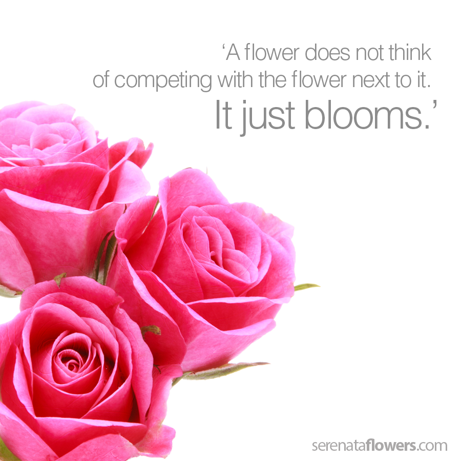 flower quote blooming rose pink roses