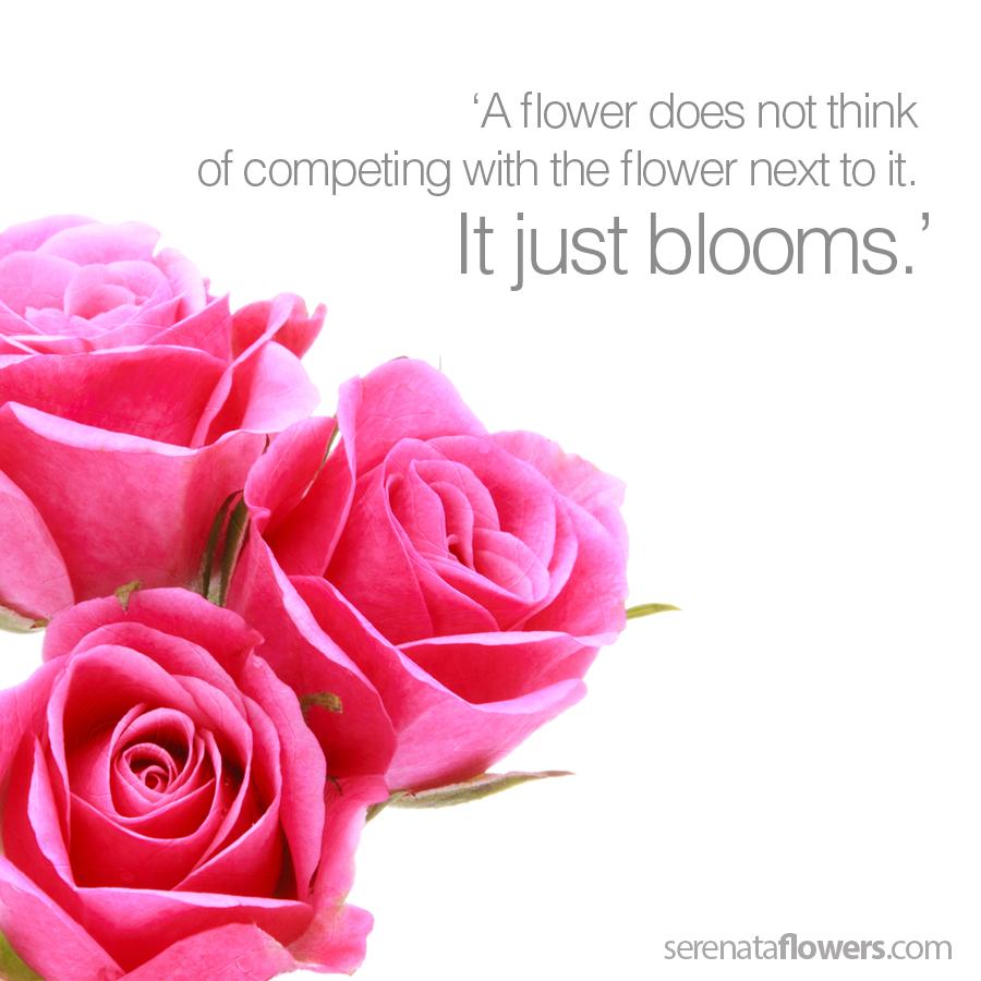 Fairtrade Rose and Alstromeria (Interflora) Flowers