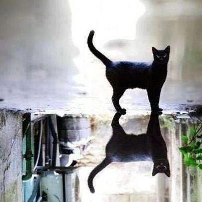 Car Silicone Handbrake Cover Universal Non Slip Dustproof Protector Walmart Com Cats Black Cat Crazy Cats
