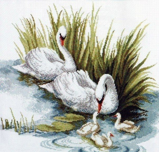 Nº9 - Cisnes - Aves - Não Disco Externo