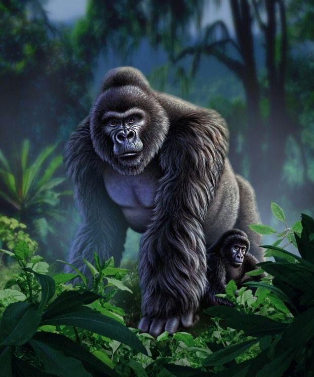ilustraciones de animales gorilas