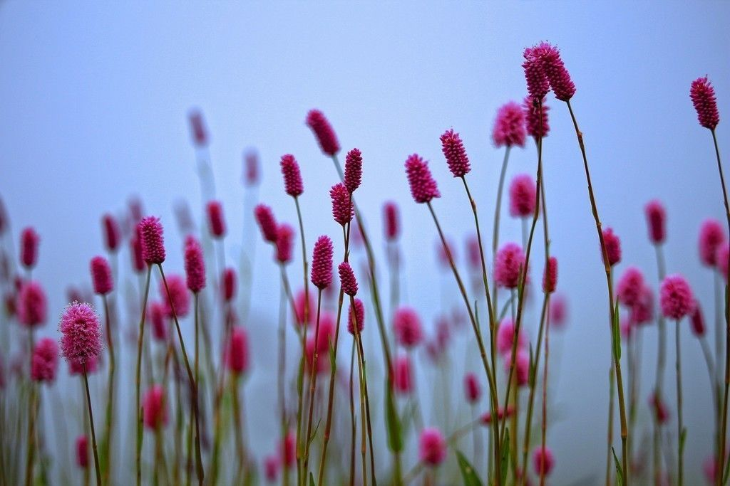 Spring Wild Plants Pink Flowers Wallpaper With Images