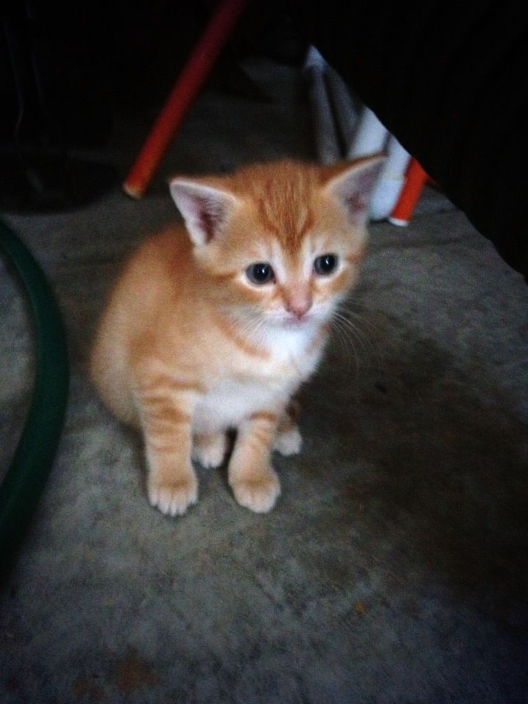 I want this to be my someday favorite pet. I'll name him Pumpkin.
