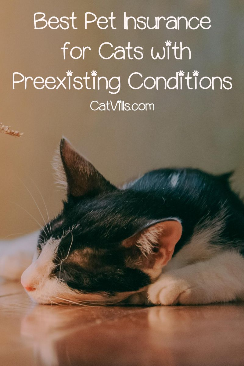 Top 3 Best Pet Insurance For Cats With Preexisting Conditions Cat Health Guide Best Pet Insurance Pet Quotes Cat Pet Insurance
