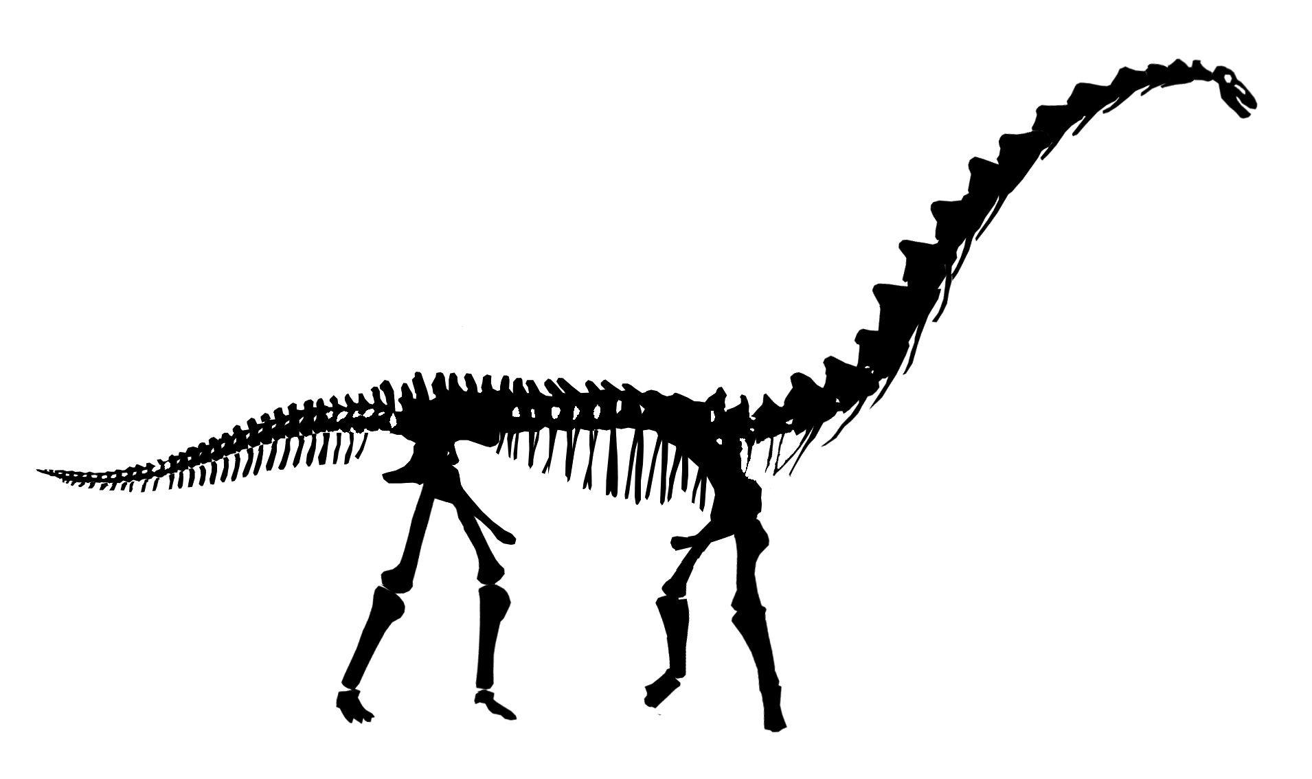 Appendicular Skeleton Diagram Fossil Bones Skeleton Silhouette