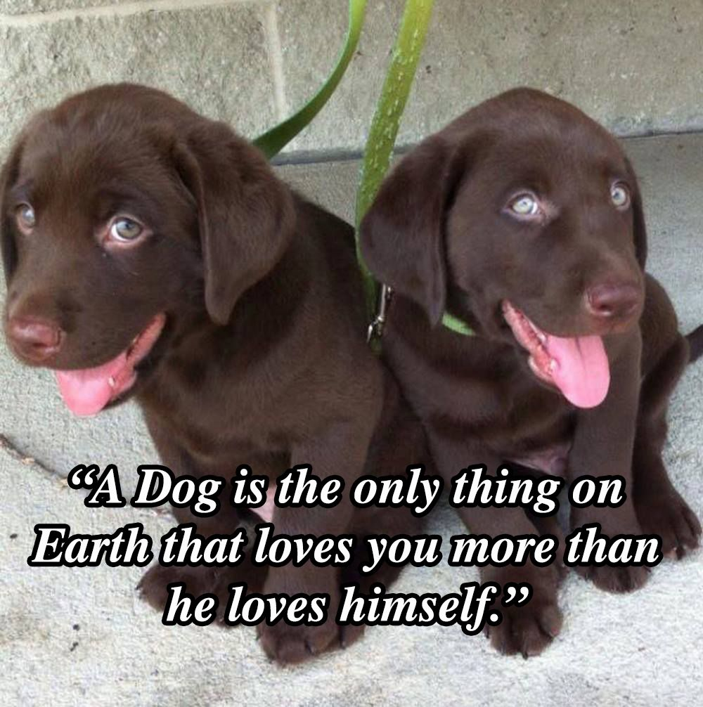 Dog Love Quotes 10 Dog Quotes That Will Inspire Any Dog Owner  Dog Puppys And Pup