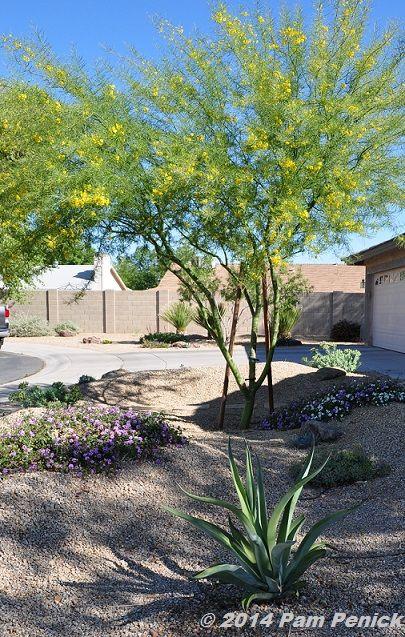 Colorful Desert Garden Of Noelle Johnson Arizona Plant 400 x 300