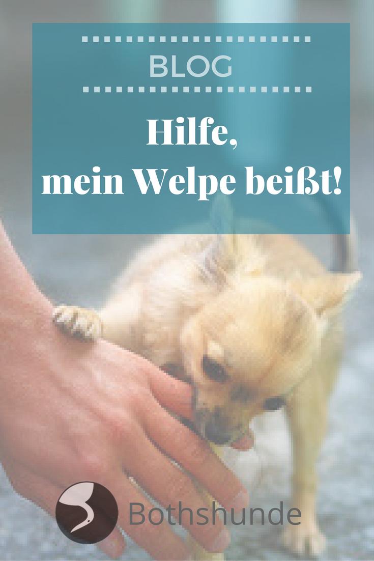 Hilfe Mein Welpe Beisst Hilfe Im Bothshunde Blog Welpen Hunde Und Hundchen Training