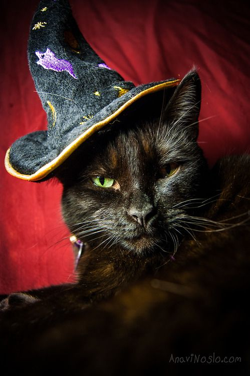 Beautiful Black CATS (ᵔᴥᵔ) green eyes in witch's hat