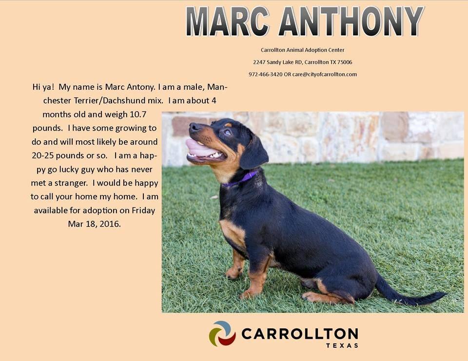 pet adoption fund facebook