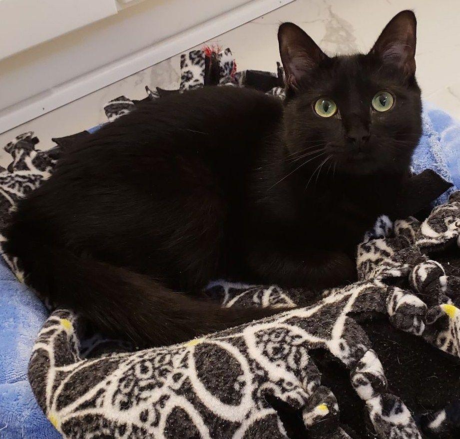 Meet Fredo, The Adorable Wobbly Black Kitten Who Was