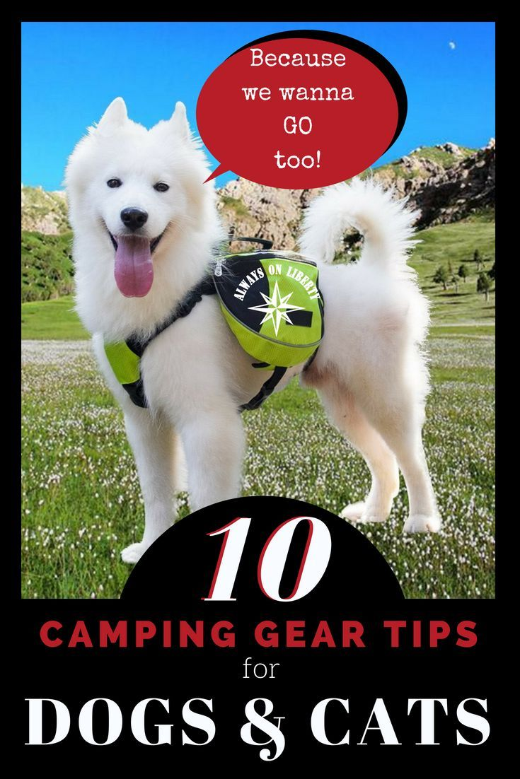 Photo of Cool Camping Gear for Dogs and Cats – Always On Liberty
