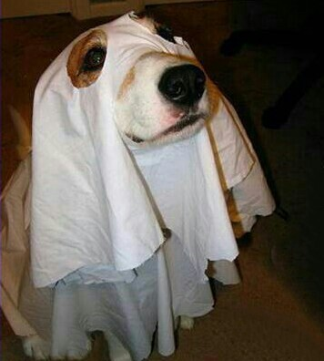 Halloween costumes · Ghost dog ?. ? ? & Ghost dog ?. ? ? | Halloween costumes | Pinterest | Ghost dog and ...